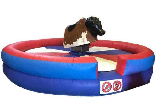 Rodeo Bull Belfast